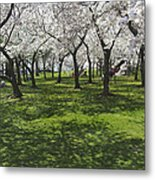 Under The Cherry Blossoms - Washington Dc. Metal Print