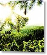 Under The Evergreen Metal Print by Christian Rooney