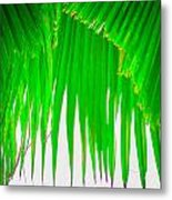 Under The Fan Palm Metal Print