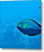 Under The Honolulu Sea Metal Print