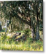 Under The Live Oak Tree Metal Print