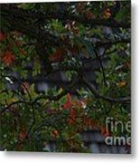 Under The Old Oak Tree Metal Print
