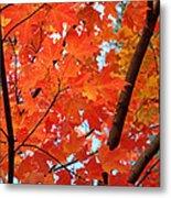 Under The Orange Maple Tree Metal Print by Rona Black