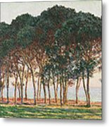 Under The Pines. Evening Metal Print