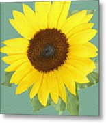 Under The Sunflower's Spell Metal Print
