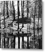 Under The Tall Trees Metal Print