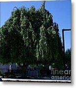 Under The Weeping Tree Metal Print