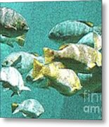 Underwater Fish Swimming By Metal Print