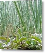 Underwater Shot Of Submerged Grass And Plants Metal Print