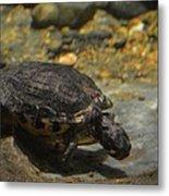 Underwater Turtle Metal Print