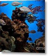 Underwater View Metal Print