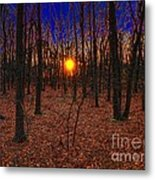 Unenchanted Forest Metal Print