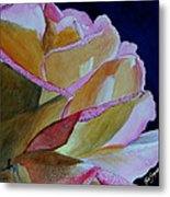 Unfolding Rose Metal Print