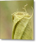 Unfurling 2 Metal Print