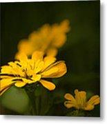 Unidentified Yellow Flower Metal Print