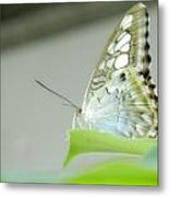 Unique Looking Butterfly Metal Print