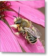 The Color Of Honey Metal Print