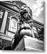 University Of Cincinnati Lion Black And White Picture Metal Print