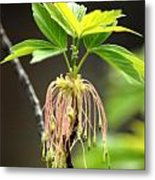 Unknown Tree Flower Metal Print