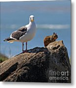 Unlikely Friends By Diana Sainz Metal Print by Diana Sainz