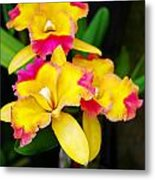 unnamed - Orchid Metal Print