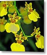 unnamed hybrid Orchid  Metal Print