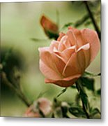 Unraveling Beauty Metal Print by Kelly Rader