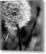 Unspent Wishes Metal Print