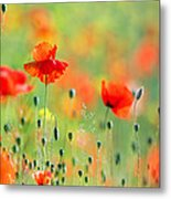 Untited Colours Of Summer  Metal Print