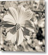 Untitled 8514 Metal Print by Stephen Melcher