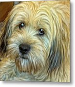 Chewy Metal Print