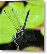 Up And Flying Metal Print