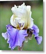 Up Close Elegant Iris Metal Print
