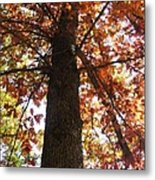 Up Fall Metal Print