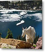 Up From The Lake Metal Print