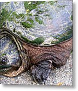 Up From The Pond Metal Print