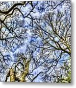 Up Into The Trees Metal Print