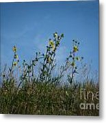 Up On The Hill Metal Print