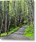Up The Trail Metal Print