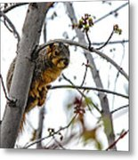 Up The Tree Metal Print by Robert Bales
