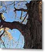 Up The Trunk Metal Print