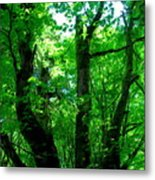 Up Through The Trees Metal Print