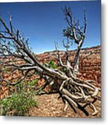 Uprooted - Bryce Canyon Metal Print