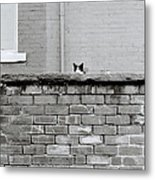 Curiosity Of The Cat Metal Print