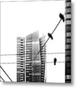 Urban Pigeons On Wires Metal Print