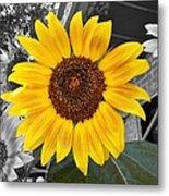 Urban Sunflower Metal Print