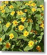 Us Botanic Garden - 121220 Metal Print