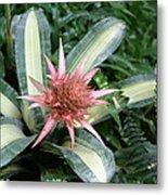 Us Botanic Garden - 121232 Metal Print