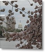 Us Capitol - Cherry Blossoms - Washington Dc - 01132 Metal Print by DC Photographer