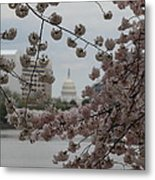 Us Capitol - Cherry Blossoms - Washington Dc - 01133 Metal Print by DC Photographer
